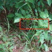 Finde die Schlange Ken Reid Conservation Area | wat-erleben