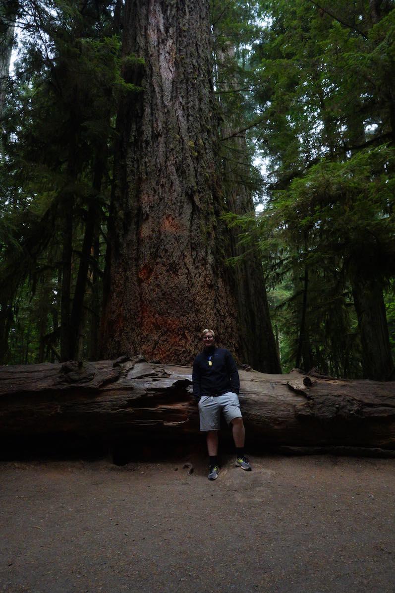 Bernd:Der älteste Baum im MacMillan Provincial Park,Cathedral Grove   wat-erleben