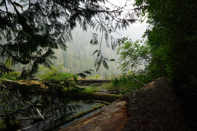 Cameron Lake, Cathedral Grove   wat-erleben