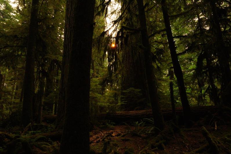 Die Sonne im MacMillan Provincial Park,Cathedral Grove   wat-erleben.JPG