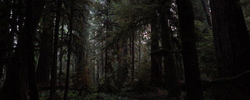 MacMillan Provincial Park,Cathedral Grove | wat-erleben.JPG