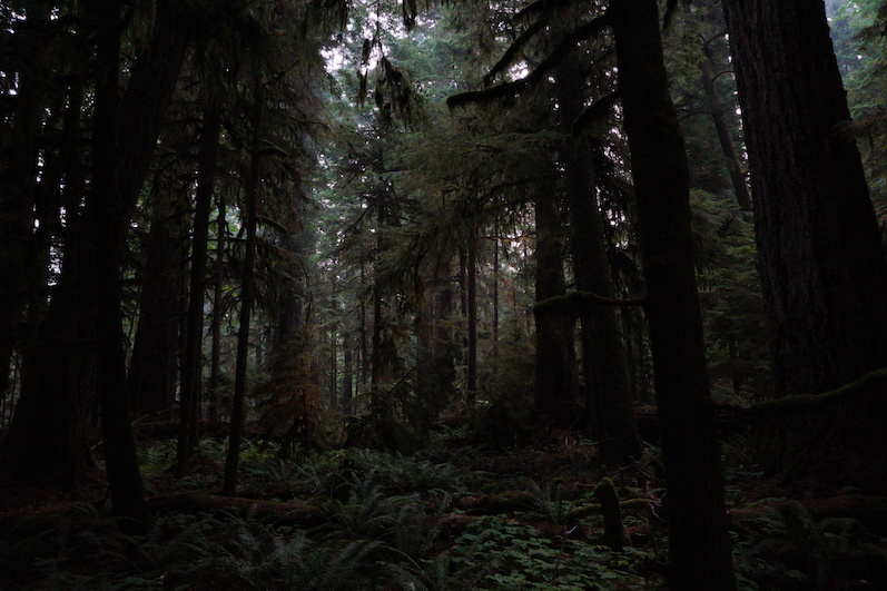 MacMillan Provincial Park,Cathedral Grove   wat-erleben.JPG