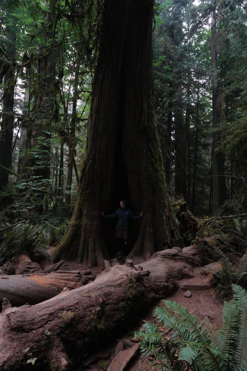 Mitten im Baum; MacMillan Provincial Park,Cathedral Grove   wat-erleben