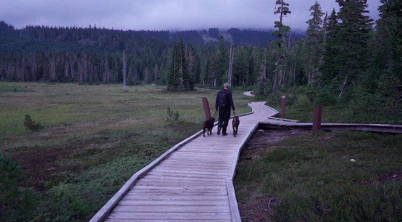 Unterwegs am Mount Washington, Courtenay | wat-erleben