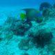 Bunte Fische auf Cozumel | wat-erleben
