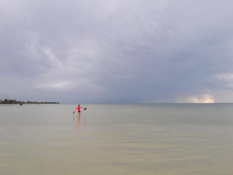 Dies ist kein heimischer Flamingo, Isla Holbox | wat-erleben