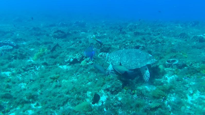 Schildkröten sind so süß, Cozumel | wat-erleben