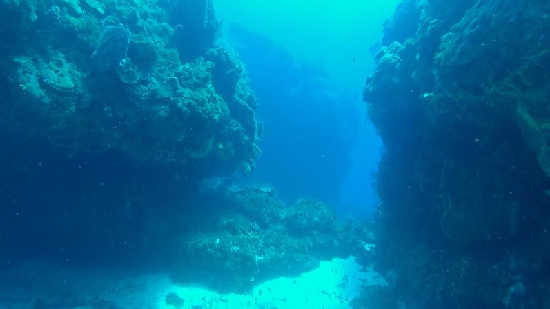 Tauchen zwischen den Riffs | wat-erleben