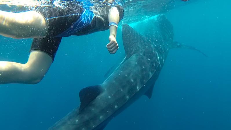 Walhai-Tour, Isla Mujeres | wat-erleben
