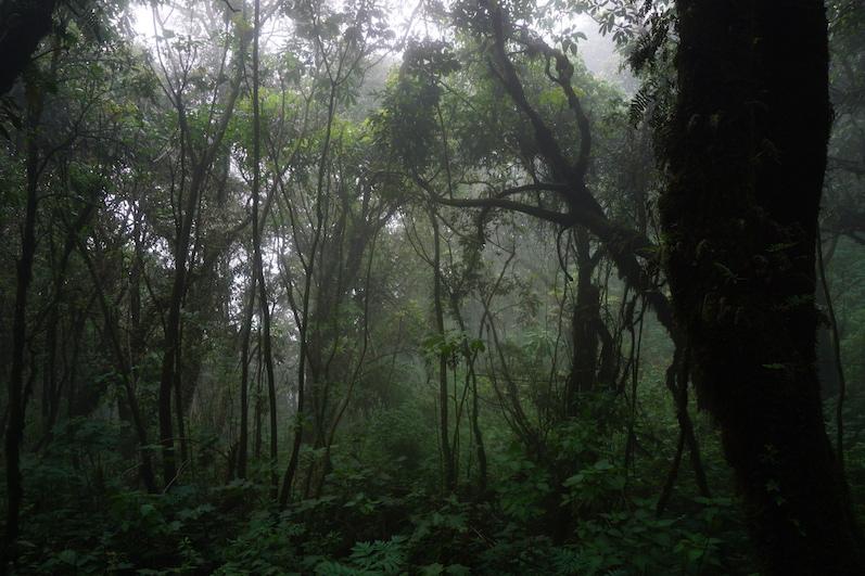 Auf der Wanderung gab es je nach Höhe unterschiedliche Vegetationen, Vulkan Acatenango | wat-erleben
