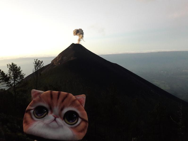 Natürlich durfte auch Minka bei der Wanderung des Acatenangos nicht fehlen | wat-erleben