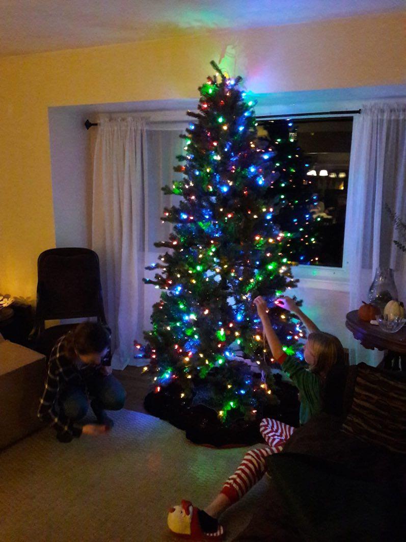 Einer der Weihnachtsbäume steht pünktlich zu Ende von Thanksgiving; fünf weitere folgen noch | wat-erleben