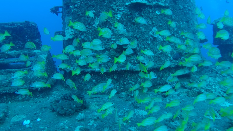 Die neuen Bewohner der Sea Tiger, O´ahu | wat-erleben