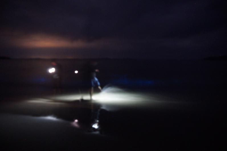 Man kann nur erahnen wie cool es war, Bruny Island | wat-erleben