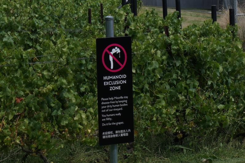 Wir durften den Weinberg trotzdem besichtigen, Moorilla Estate-Hobart | wat-erleben