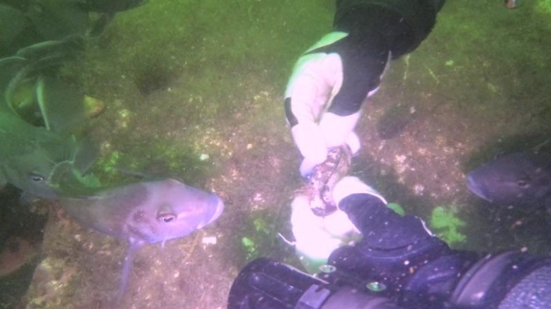 Es gab frische Muscheln zur Vorspeise, Lermontov Wreck, Neuseeland |wat-erleben