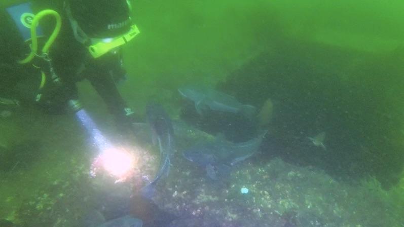 Irgendwie fanden die Fische Laura interessanter, Lermontov Wreck, Neuseeland |wat-erleben
