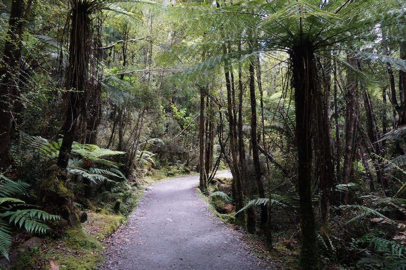 Regenwald auf dem Weg zum Lake Matheson, Neuseeland | wat-erleben