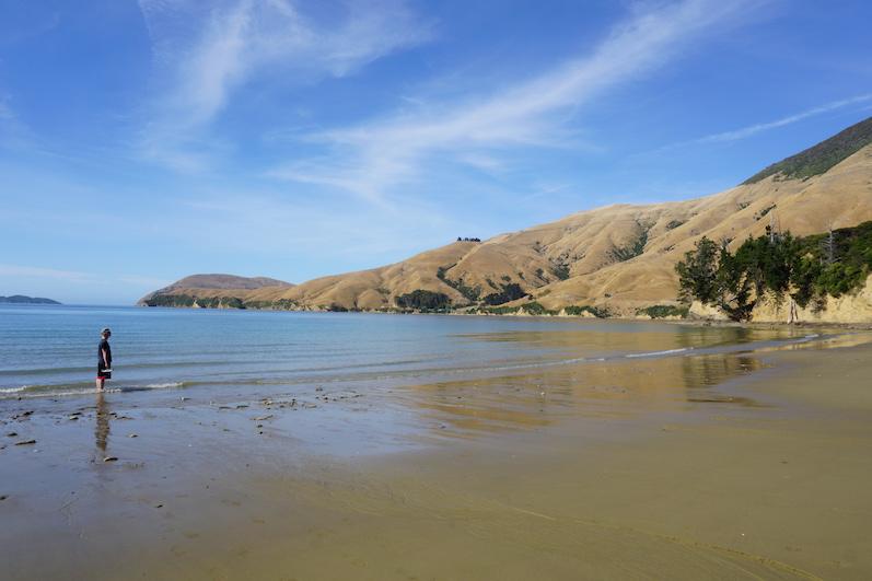 Schöne Kulisse zum Übernachten – viel wichtiger, ich kühle die Bisse der Sandfliegen, Titirangi Bay, Neuseeland |wat-erleben