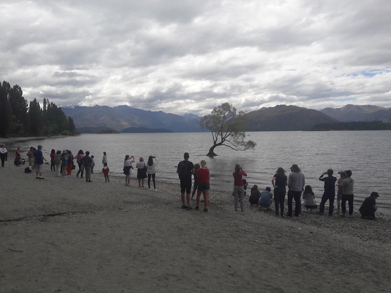 So dann vor dem Baum, Lake Wanaka, Neuseeland | wat-erleben