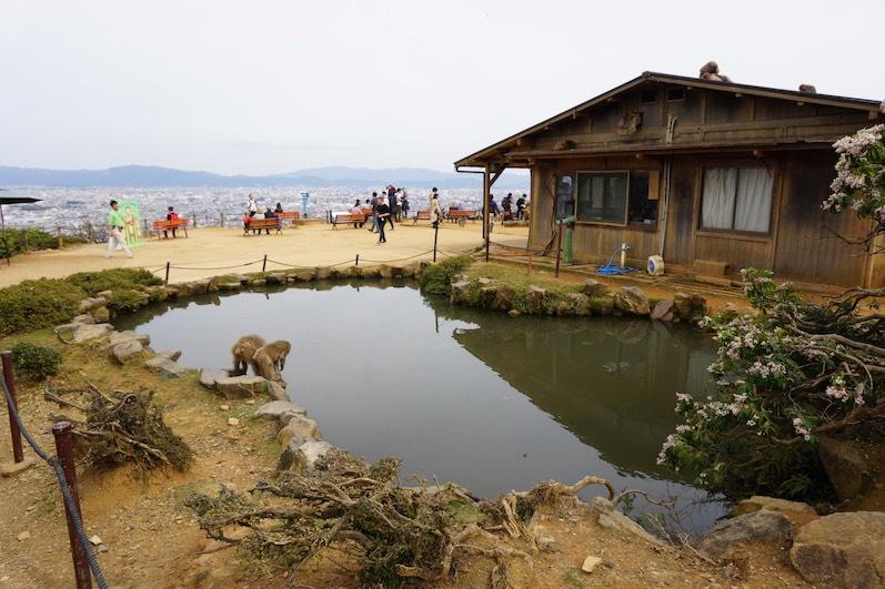 Im Winter besuchen die Affen heiße Quellen, um sich aufzuwärmen, Kyoto, Japan |wat-erleben