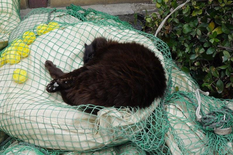 Katzen gehören zu den Schreinen, Kyoto, Japan |wat-erleben