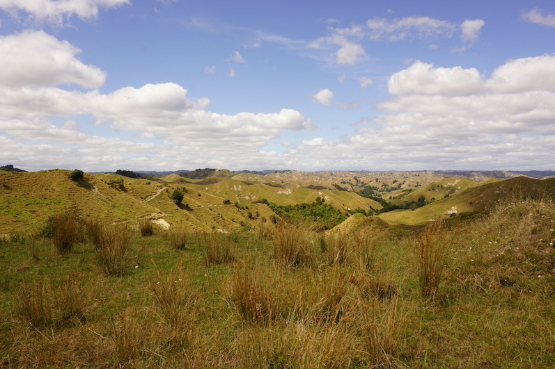 So sah es an vielen Stellen auf der Nordinsel aus, hier müssen überall Hobbits wohnen, Neuseeland | wat-erleben
