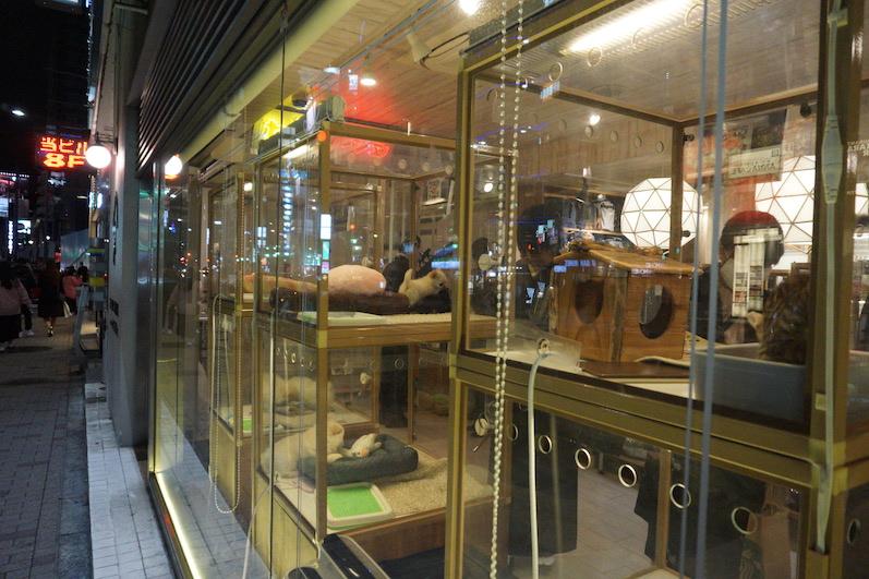 Viel zu süße Hunde im Schaufenster - die Armen, Tokio, Japan |wat-erleben