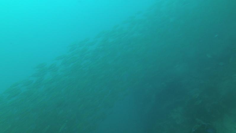 So viele Fische, dass man die Taucher auf der anderen Seite nicht mehr sieht, Sail Rock |wat-erleben