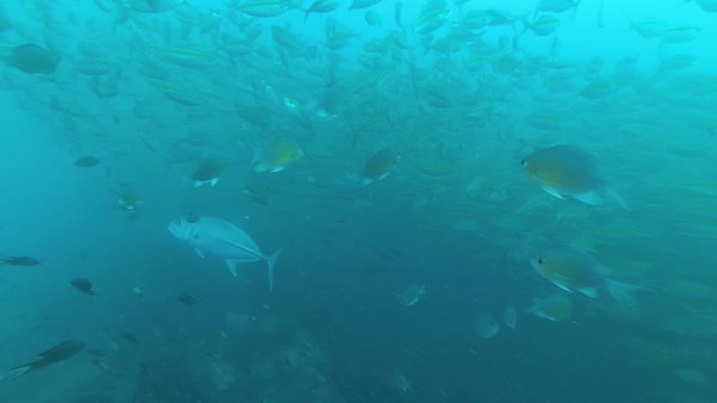 Und noch mehr Fische, einfach Wahnsinn, Sail Rock |wat-erleben