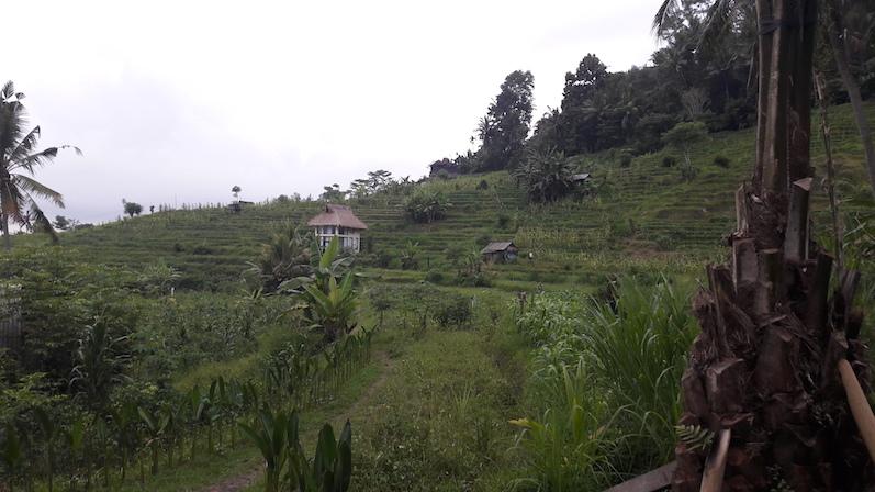 Wir dachten schon in der ersten Nacht, dass wir am Arsch der Welt wären, in der zweiten Nacht zogen wir in diese Unterkunft (siehe Haus) um, Sidemen, Bali | wat-erleben